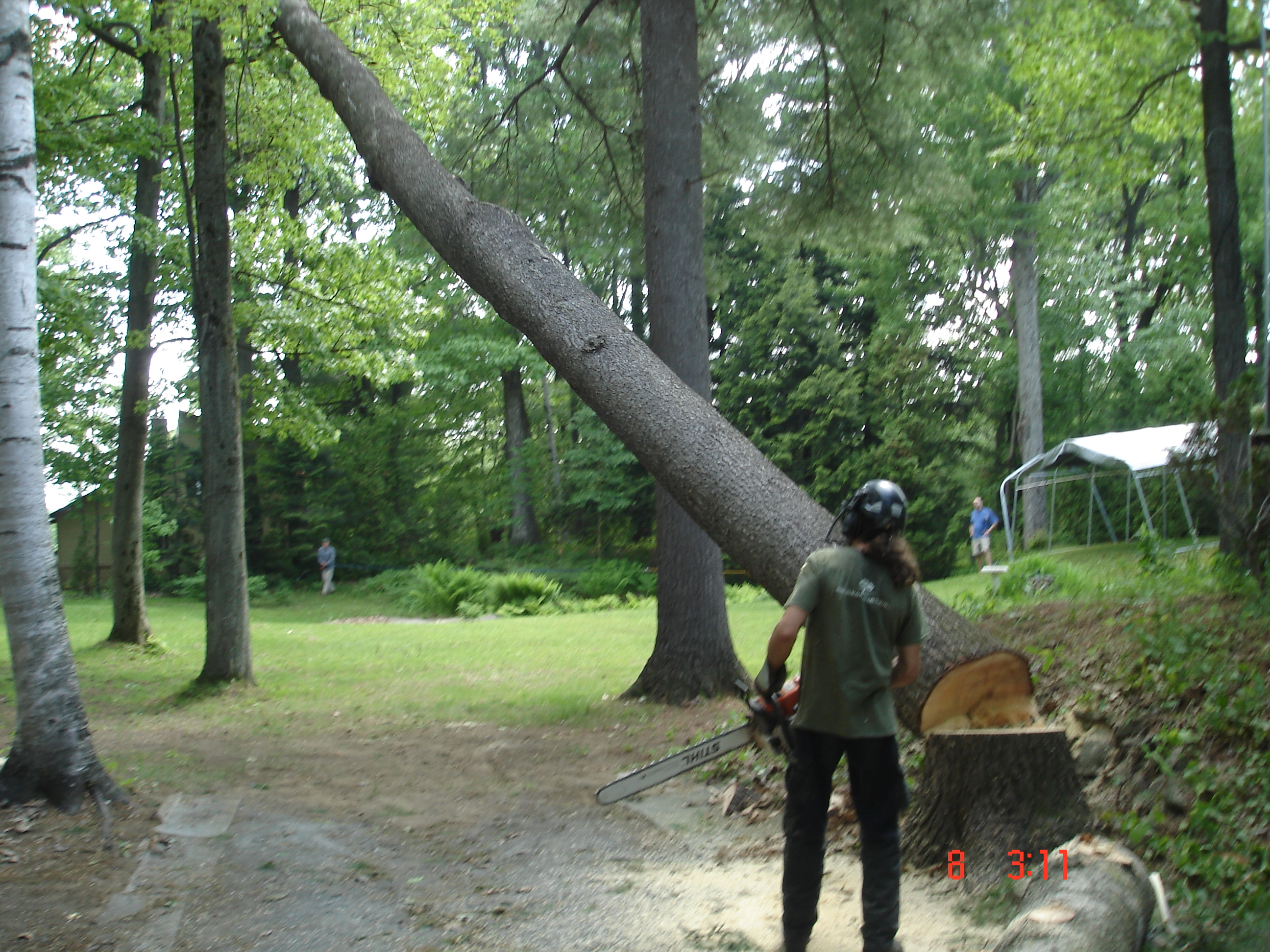 abattage d 39 arbres sherbrooke services d 39 arbres gamelin. Black Bedroom Furniture Sets. Home Design Ideas