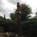 coupe-d-arbre