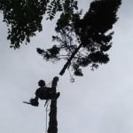 emondage-arbre-medium