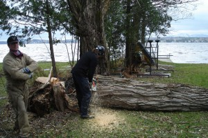Abattage d'arbre à Val-du-Lac