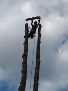 abattage-d-arbre-lennoxville-36