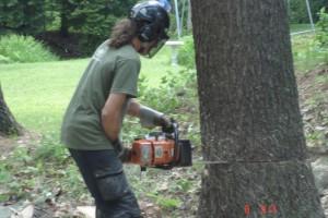 Coupe d'arbre à Drummondville