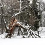 entretenir arbre-hiver