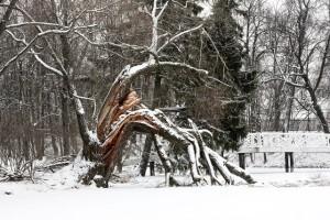 entretenir-arbres-hiver
