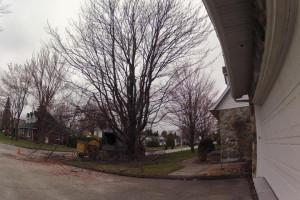 Nettoyage d'un érable au Nord de Sherbrooke