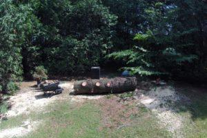 Abattage d'un pin blanc à Shefford