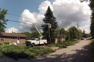 Abattage d'un pin blanc et d'un sapin à Saint-Denis-De-Brompton