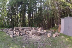 Travaux d'abattage d'arbres à Sherbrooke