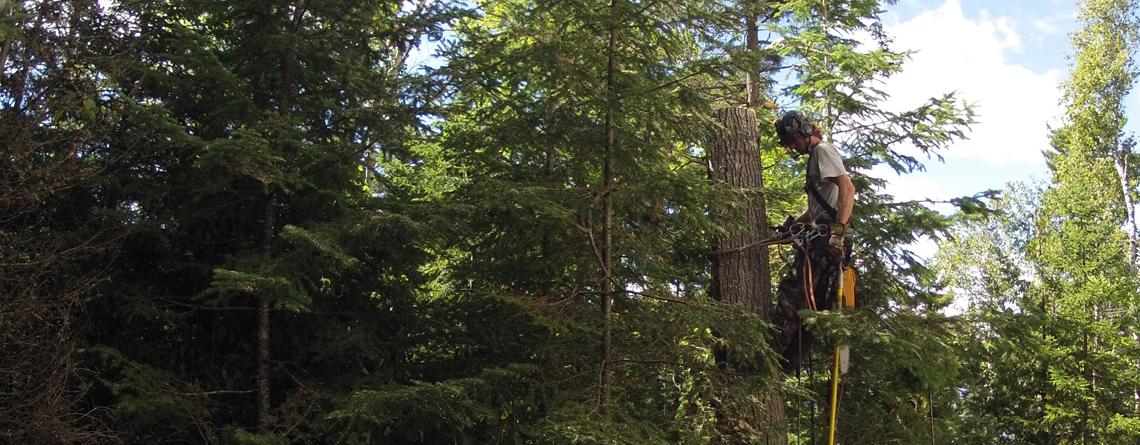 Services d'arbres